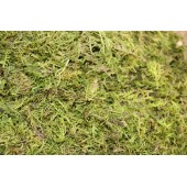 Forest Moss - 3lb