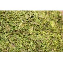 Forest Moss - 3lb
