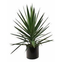 #Yucca Bush- Package